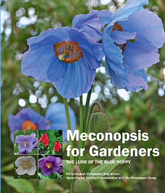 Meconopsis for gardeners