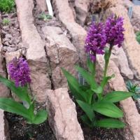 14. Orchidaceae