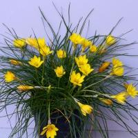22. Løg/knold plante som ikke er dækket af kategori 23-29
