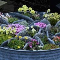 01. Vise et alpint bed i haven herunder trug