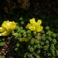 04. Pudeplante i blomst