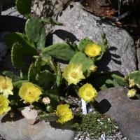 05. En alpin plante i blomst som ikke er dækket af klasserne 6-9