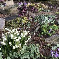 02. Vise et skovbundsbed i haven